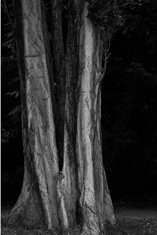 23.  Tree Trunks, Wanaka, New Zealand