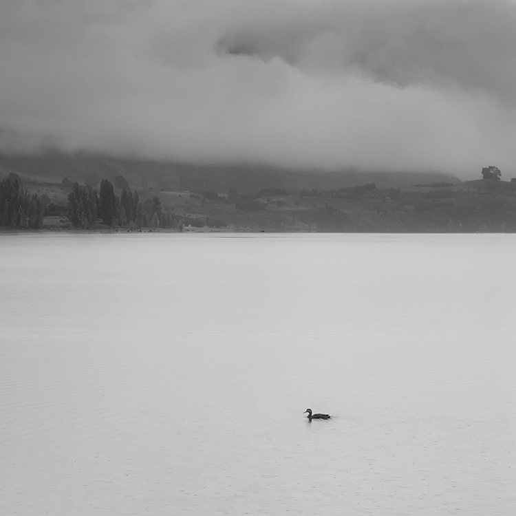 3.  Lake Wanaka with a duck.  New Zealand