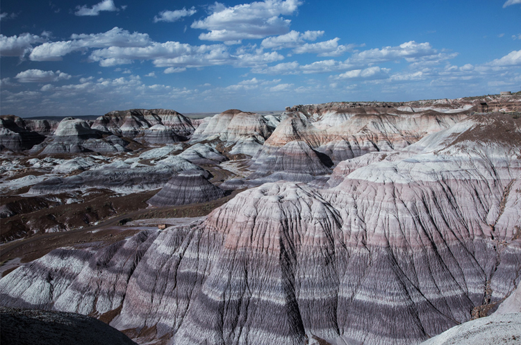 37.   Petrifed Forest,  Arizona